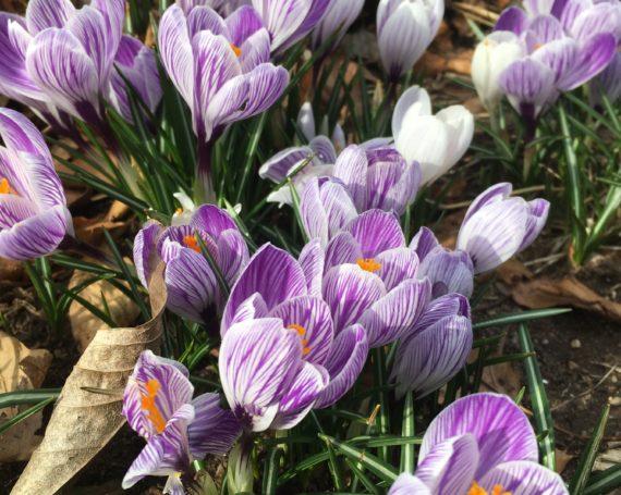 Spring Promos